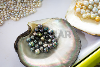 Pearl Farming and Oysters