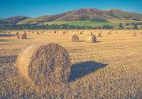 Scottish Farming Scene