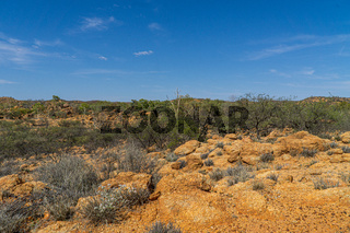 in the australian outback some dry bushes and grasses stand in the desert