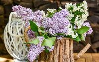 lila Flieder in einer Holzkanne Blumenstrauß