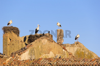 Storks standing at the roof