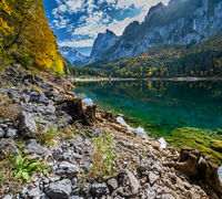 Tree stumps near Gosauseen or Vorderer Gosausee lake, Upper Austria. Colorful autumn alpine view of mountain lake with clear transparent water and reflections. Dachstein summit and glacier in far.