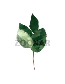 Watercolor modern decorative element set. Eucalyptus round Green leaf Wreath, greenery branches, garland, border, frame, elegant watercolor isolated, good for wedding invitation, card or print
