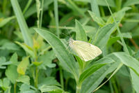 White butterfly on a green grass