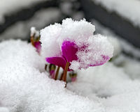 Snow on a cyclam