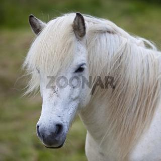 IS_Pferd_05.tif