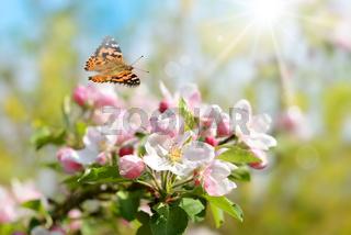 Fruehling 447