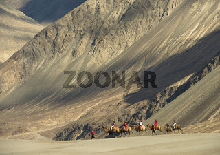 LADAKH, INDIA, July 2013, Tourist on bactrian camel ride
