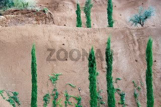 Fresh green junipers, vines and other trees against red clay background