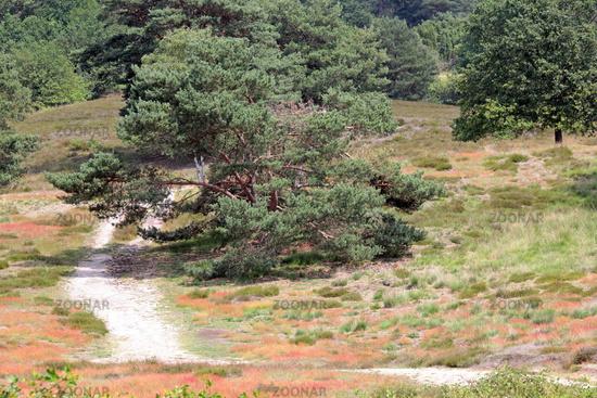 Westrup Heath