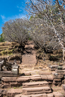Plumeria flower trees at the ruins of the Vat Phou Khmer temple, Laos