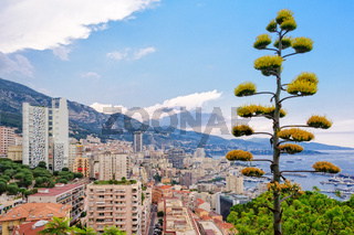 View from the Jardin Exotique - Monaco