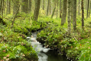 creek in the autumn green forest