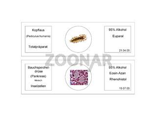 Mikroskopische Präparate mit Beschriftung