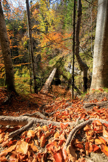Autumn Forest with Beautiful sunlight in Austria