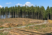 Forest with deforested trees