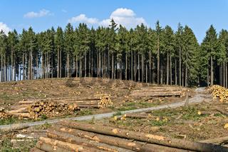Waldstück mit abgeholzten Bäumen