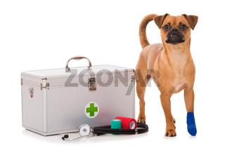 Hund mit verletzter Pfote