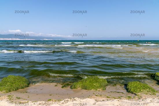 Algal, Algae blooms in Sunny Beach on the Black Sea coast of Bulgaria