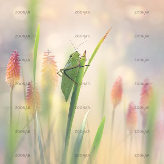 Green Leaf Grasshopper in the garden