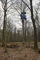 Tree houses in the Hambacher Forst, environmental protest against RWE Power and global warming