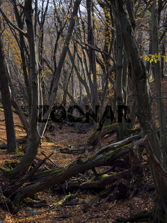 natural forest 3