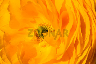 Bright Yellow Flower Inside Center Macro Petals Closeup Texture
