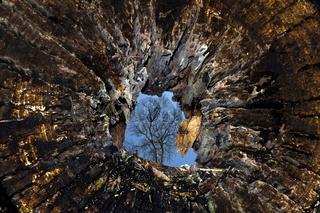 Baumstumpf, vermoderndes Holz