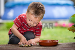 Little boy playing with tiny snails