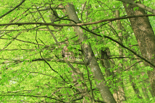 trees in forest in spring time