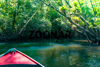 Canoe crossing a mangrove canal under trees