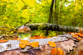 Crystal ball on a wooden log in a forest