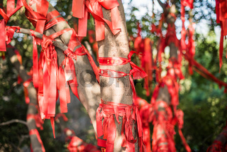 Red ribbons with wish writing hanging on trees