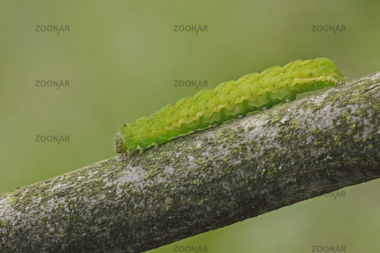 Angle shades caterpillar