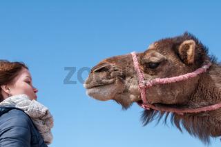Kamel interessiert sich für Touristin