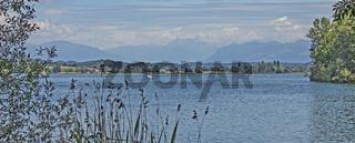 Naturschutzgebiet Greifensee, Kanton Zürich, Schweiz