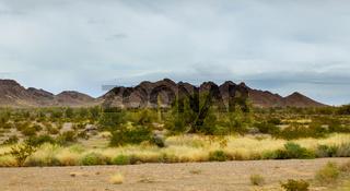 Early Evening in Arizona desert cactus Tucson