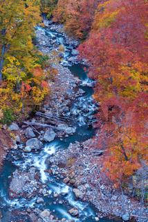 Aerial Autumn Forest River Japan