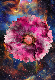 Space and stars with flower, color galaxi  background, computer collage.