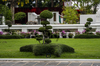 Various trees and plants in the park. Ornamental plants for decorating public places, parks, squares and private lawns.