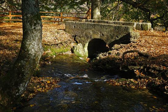 Near the Uracher waterfall, swabian alb, germany