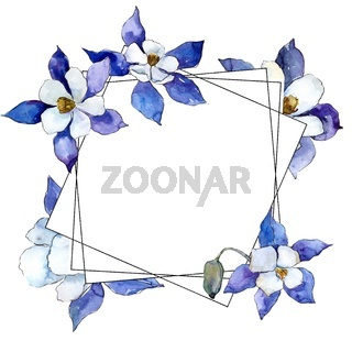 Blue aquilegia flower. Floral botanical flower. Frame border ornament square.