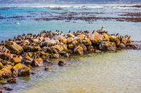 Boulders and algae on Atlantic