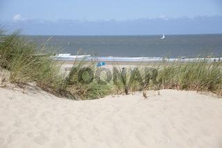 Strandhafer (Ammophila) am Sandstrand bei Cadzand