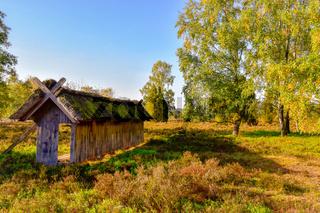 Goldener Herbst in der Lüneburger Heide bei Undeloh