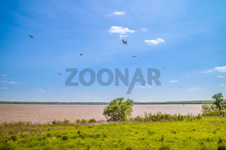 Black Birds roaming around in Tishomingo National Wildlife Refuge, Oklahoma