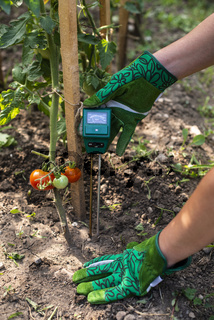 Moisture meter tester in soil. Measure soil for humidity on tomato plants with digital device. Woman farmer in a garden.