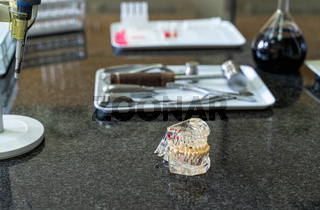 Artificial human jaw with tooth and surgical tools set on laboratory worktop