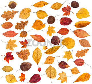 collection of various dried autumn fallen leaves