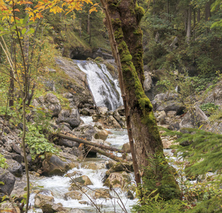 Bemooster Baumstamm, Herbst am Wasserfall